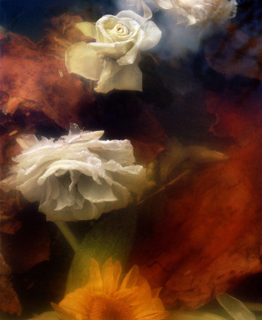 98 portfolio 5 © Jocelyn Lee