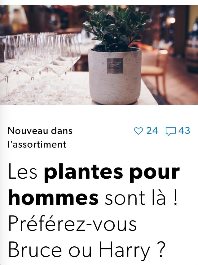 Plante pour hommes