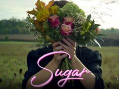 sugar-5245234