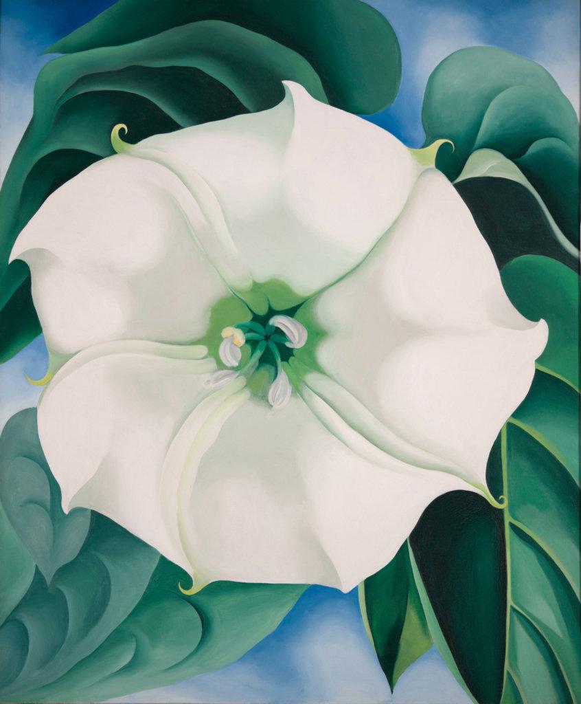 Jimson WeedWhite Flower No. 1 1932